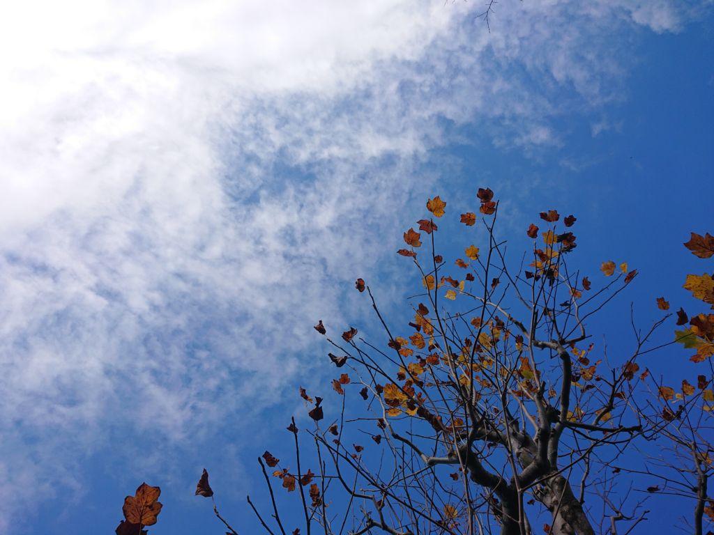 令和元年11月28日(木)